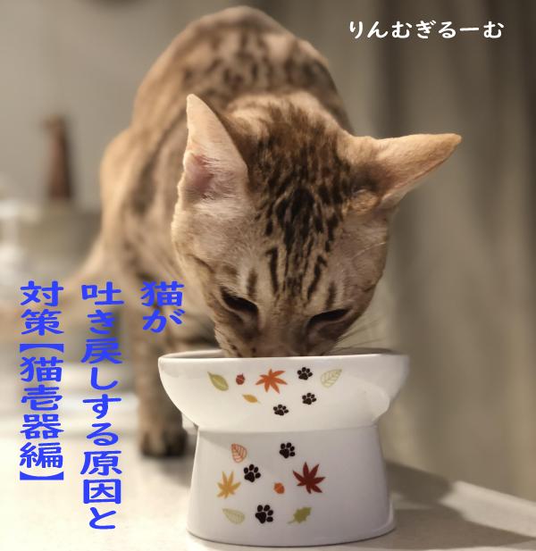 猫が吐き戻しする原因と対策【猫壱器編】